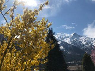 Souvenir du printemps chamoniard #merveille #échappéesbelles #chamonix #grandhoteldesalpeschamonix